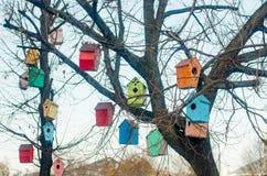 Aviários coloridos nos ramos de uma árvore Foto de Stock