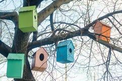 Aviários coloridos nos ramos de uma árvore Imagens de Stock