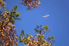 Avião no céu azul quadro por árvores imagem de stock