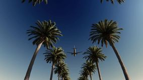 Avión de pasajeros que pasa sobre las palmeras metrajes