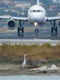 Avión y garza Foto de archivo