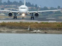 Avión y pájaro Imágenes de archivo libres de regalías