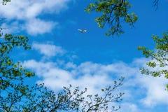 Aviões pequenos, jato privado, viajando através de um céu azul bonito em um dia ensolarado, com folhas e ramos de árvore no imagem de stock