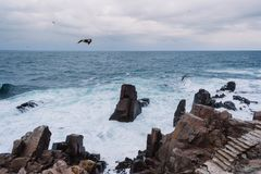 Avian, Beach, Birds, Clouds Stock Image