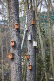Avian estate. A group of bird feeders hung on trees Royalty Free Stock Images