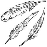 Avian feathers sketch Royalty Free Stock Photography