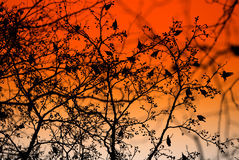 Avian flock. In treetop at sunset stock photos