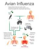 Avian Influenza.Virus Bird, Vector, Illustration. stock illustration