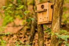 Aviario di legno alloggiato fra due alberi Immagine Stock Libera da Diritti