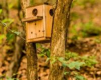 Aviario di legno alloggiato fra due alberi Immagini Stock Libere da Diritti
