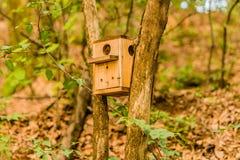 Aviario di legno alloggiato fra due alberi Fotografia Stock Libera da Diritti