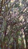Aviario nel giardino del cortile fotografia stock libera da diritti