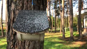 Aviario su un albero nel parco L'alimentatore dell'uccello appende su un albero video d archivio