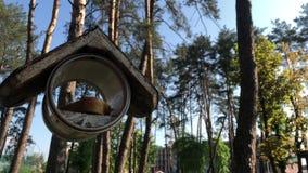 Aviario su un albero nel parco L'alimentatore dell'uccello appende su un albero stock footage