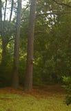 Aviario su un pino Immagini Stock