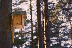 Aviario su un pino in foresta selvaggia fotografia stock