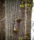 Aviario sull'albero Immagine Stock Libera da Diritti