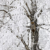 Aviario sull'albero nevoso Fotografia Stock