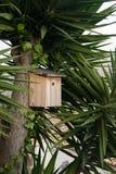 Aviario sulla palma, nido per deporre le uova fotografia stock