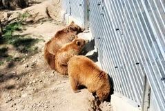 Aviary with bears. Berne, Switzerland. Royalty Free Stock Photos