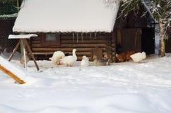 Aviary für Vögel lizenzfreie stockfotografie
