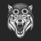 Aviateur de port animal frais, moto, casque de motard Illustration tirée par la main animale de Wolf Dog Wild pour le tatouage, e Photos libres de droits