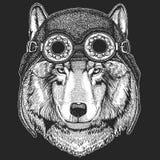 Aviateur de port animal frais, moto, casque de motard Image dessinée par Wolf Dog Hand pour le tatouage, emblème, insigne, logo,  Photographie stock libre de droits