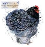 Avicoltura Il pollo cresce serie uccello domestico dell'azienda agricola Immagini Stock