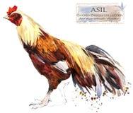Avicultura El pollo cría serie pájaro nacional de la granja Foto de archivo libre de regalías