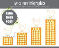 Aviculture infographics. Poultry. Vector illustration Royalty Free Stock Photos