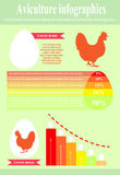 Aviculture infographics. Poultry. Vector illustration Stock Photography