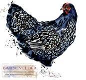 Aviculture Le poulet multiplie la série illustration domestique d'aquarelle d'oiseau illustration libre de droits