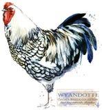 Aviculture Le poulet multiplie la série illustration domestique d'aquarelle d'oiseau de ferme illustration stock
