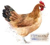 Aviculture Le poulet multiplie la série illustration domestique d'oiseau de ferme illustration libre de droits