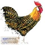 Aviculture Le poulet multiplie la série oiseau domestique de ferme Photo stock