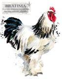 Aviculture Le poulet multiplie la série oiseau domestique de ferme illustration de vecteur