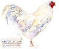 Aviculture Le poulet multiplie la série oiseau domestique de ferme illustration stock
