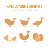 Aviculture vector set. Poultry industry illustration. Flat argiculture collection. Aviculture vector set. Poultry industry illustration. Chicken eggs and turkey Stock Images