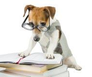 Avid smart reader Stock Photos