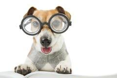 Avid smart reader Stock Image