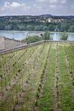 Avignons Brücke Stockfoto