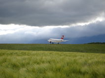 Avião na planta da natureza Fotos de Stock Royalty Free