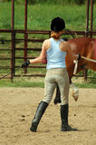 Avion-école de cheval Photo stock
