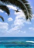 Avion au-dessus de paume photographie stock libre de droits