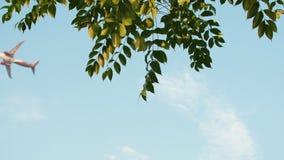 Avion décollant dans la perspective des branches d'arbre accrochantes en Indonésie banque de vidéos
