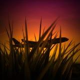 Avion dans le lever de soleil Photos stock