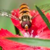 Avion en raid de pollen Images stock
