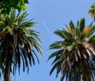 Avion entre les palmiers photos libres de droits
