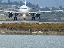 Avion et oiseau Images libres de droits