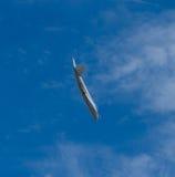 Avions de bombardier à réaction de Canberra Images stock